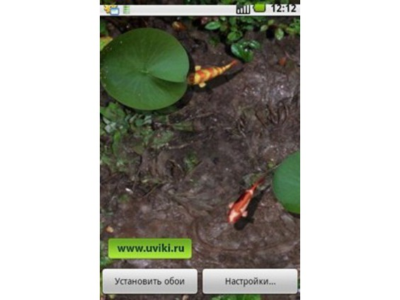Download apps 3d koi pond live wallpaper for android for Koi pond app